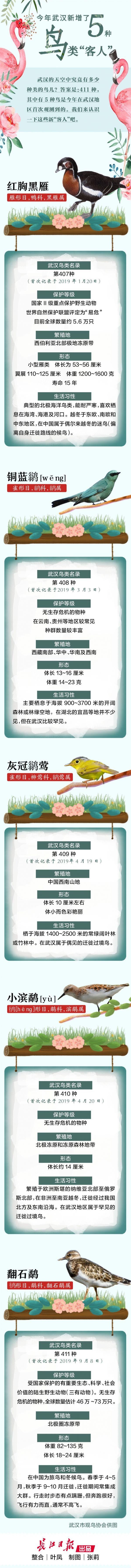 """武汉究竟有多少种鸟411种,今年新增5种""""鸟客人"""""""
