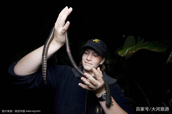 世界上最长的巨型蚯蚓,最长2米多,还会散发类似百合香气!