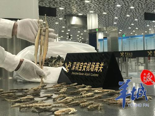 宝安机场海关查获旅客违规携带疑似干海马5.52千克