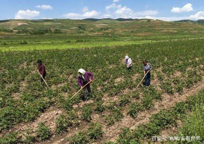 """世界上最""""失败""""的沙漠,中国人在上面大量种土豆,居然大丰收了"""