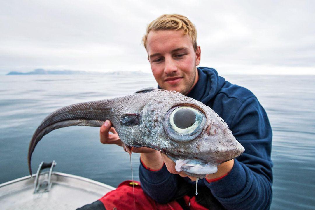五颜六色: 银鲛 | 巨型蔬菜 | 塑网人鱼