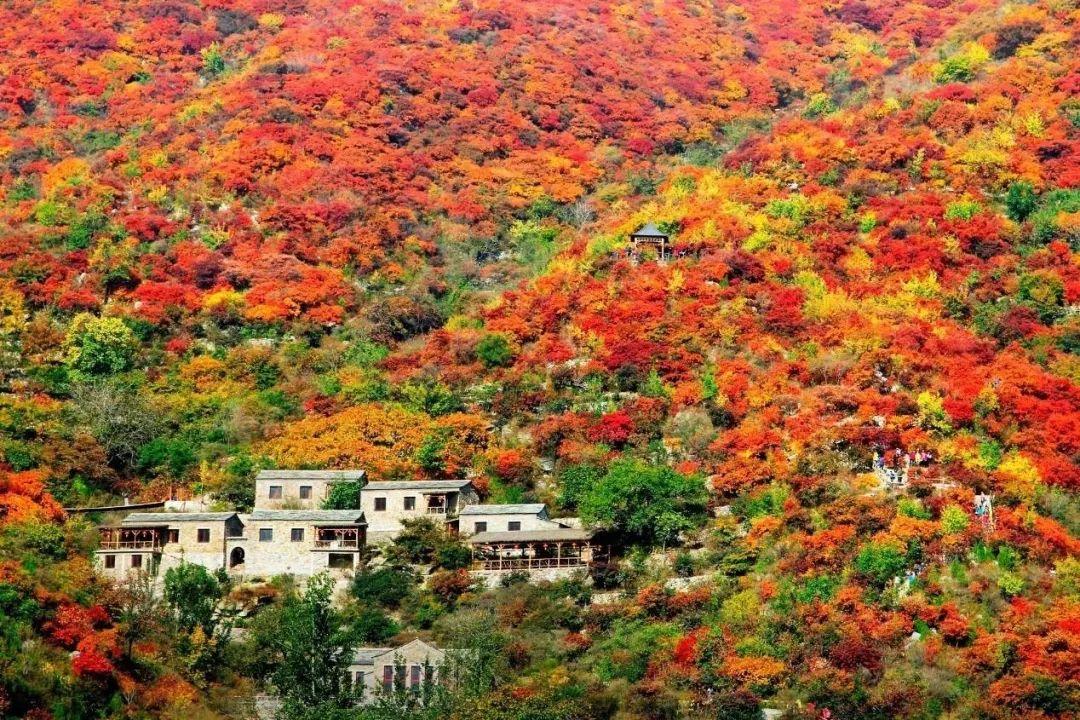 十月里的京郊风景美宿——红叶房,这个秋天和你一起独拥万亩红叶