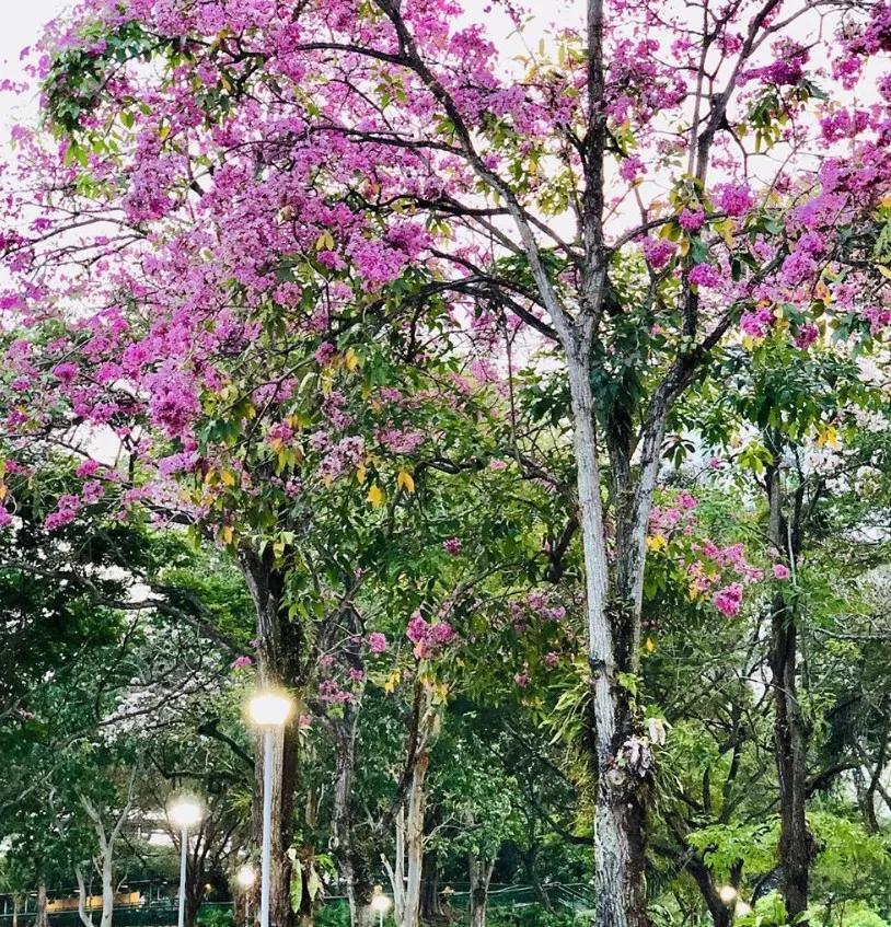 碧山宏茂桥公园平面图