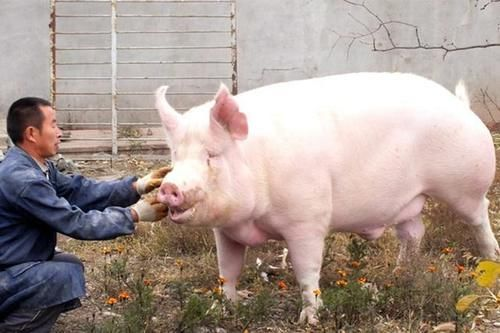 <b>现在在农村养猪,环保要求有多高?看完就知道了</b>