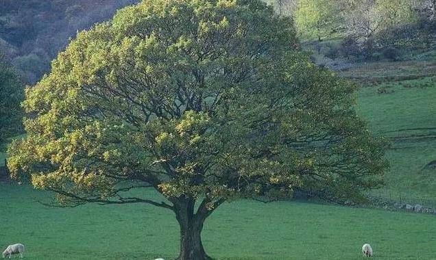 测试:3棵大树,哪棵靠得住?测一测你心底最依赖谁!