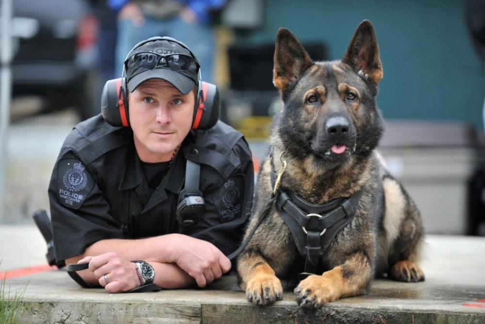 价值1.5万的警犬防弹衣,对敌能防AK子弹,入水能当救生衣