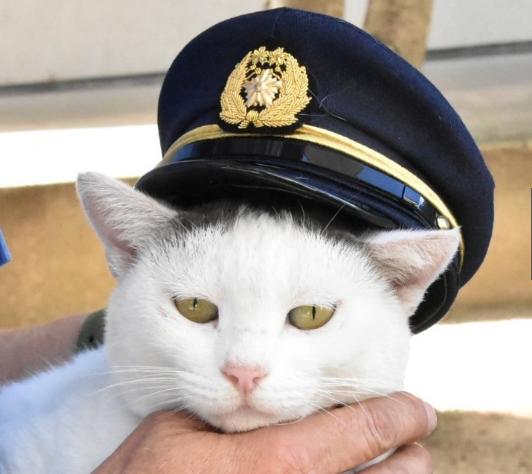 """超萌!日本猫咪交警上岗 戴警帽""""疏导""""交通"""
