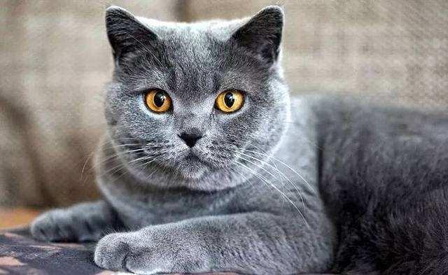 为何人人都爱 撸猫 让下面这几只猫咪告诉你,不萌不要钱