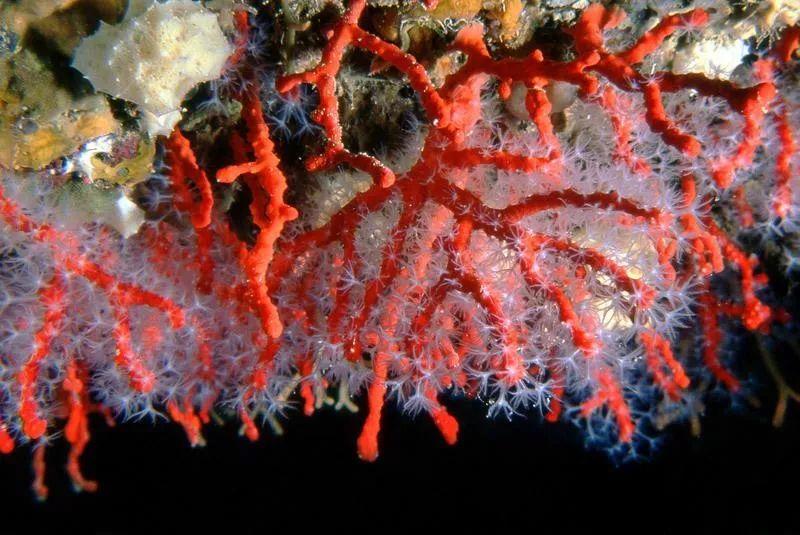 【福利】2年涨价3倍依然供不应求!珊瑚究竟凭什么?