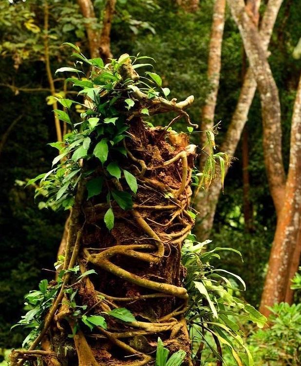 <b>云南独有的这几个植物,让人震惊百思不得其解</b>