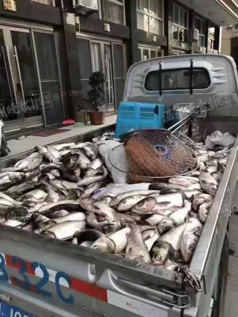 """浙江乐清惊现""""漫天飞鱼""""奇观 光站着就有鱼跳到手上"""