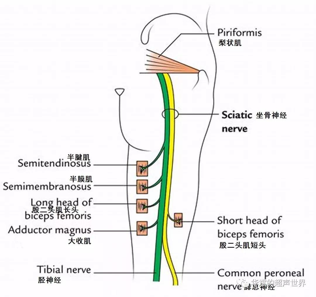 坐骨神经痛身体会出现哪些症状呢?你了解吗?
