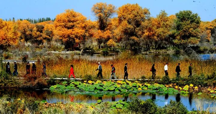 新疆泽普县人口_泽普县第五中学图片