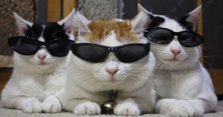 """猫号热度超过流量明星!看看现代人都是怎么""""云养猫""""的~"""