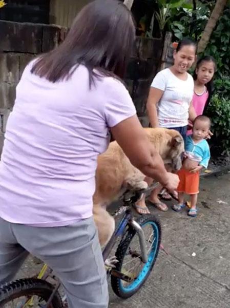 菲律宾一只忠犬街头苦等主人 看到主人去世悲伤不已