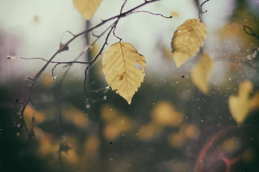 秋雨,就是秋天最优雅的诗词