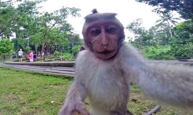 """恐怖的""""食人猴""""你听过吗?即将拥有语言能力,难道悟空要出市?"""