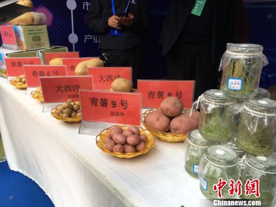 """""""中国薯都""""甘肃定西:优化储藏库提质保增收"""