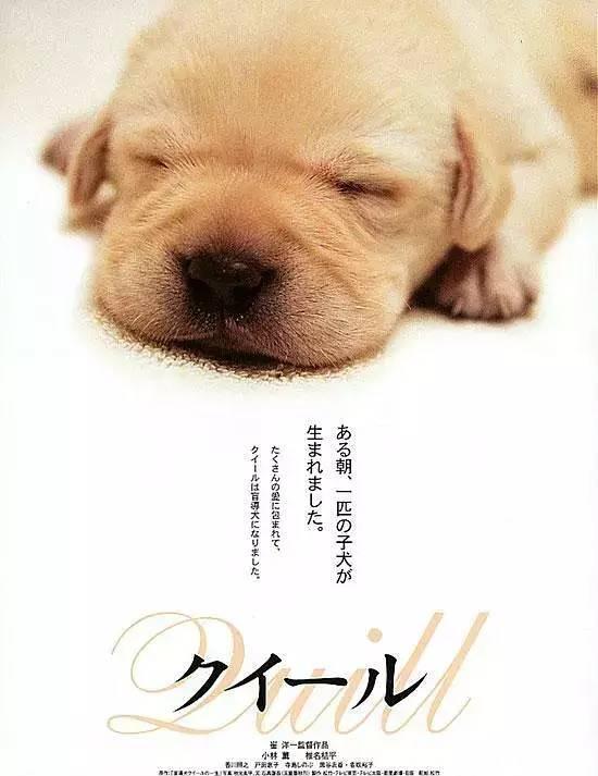 21世纪最赚眼泪的狗?《小Q》:对不起,我的命太短了