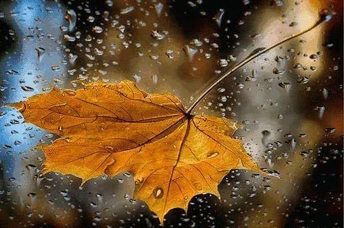 这场秋雨终于要在周末暂停了!气温将慢慢爬升,嗨起来吧!