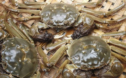 调查:今年螃蟹市场呈何走势?