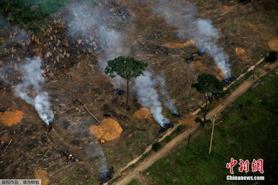 巴西总统府回应保护雨林呼声:正全力以赴应对危机