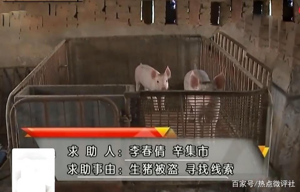"<b>光天化日,38头猪""被偷""气哭老农,报警10天至今仍下落不明!</b>"