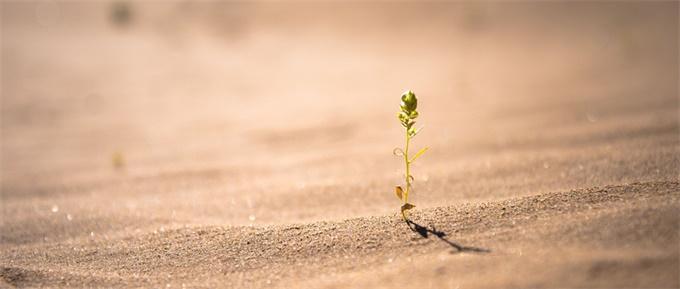 """蚂蚁森林获联合国""""地球卫士奖"""" 中国连续3年环保成就傲视全球"""