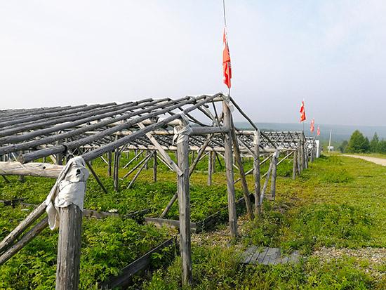 前哨林场:传承红色基因党建引领发展