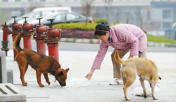 """狗狗有这几个表现,说明它是传说中的""""傻狗"""",你注意到了吗?"""