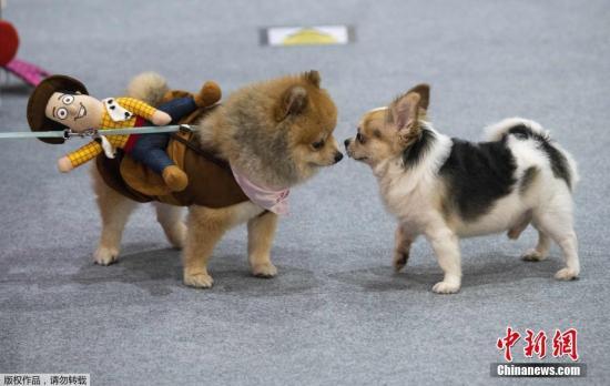 最新统计:台湾宠物产业兴起销售额10年增7成