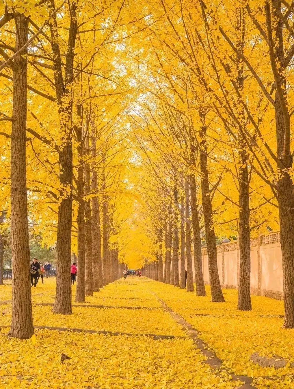 賞秋攻略:北京城那些賞秋的地方!