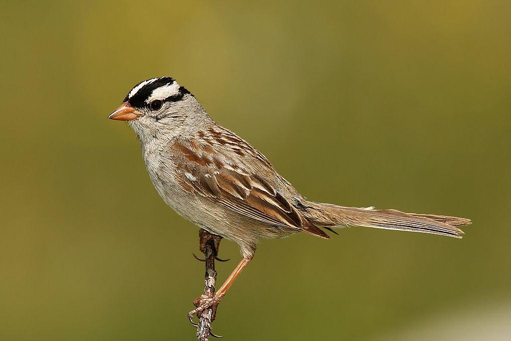 """科学警讯:新烟碱类杀虫剂会让鸟类""""厌食"""""""