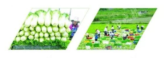 贵州优质农产品信息发布平台将上线打造永不落幕线上农交会