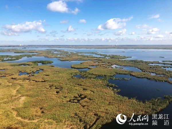 【新时代东北振兴】走进大庆龙凤湿地自然保护区:感受城中湿地之美