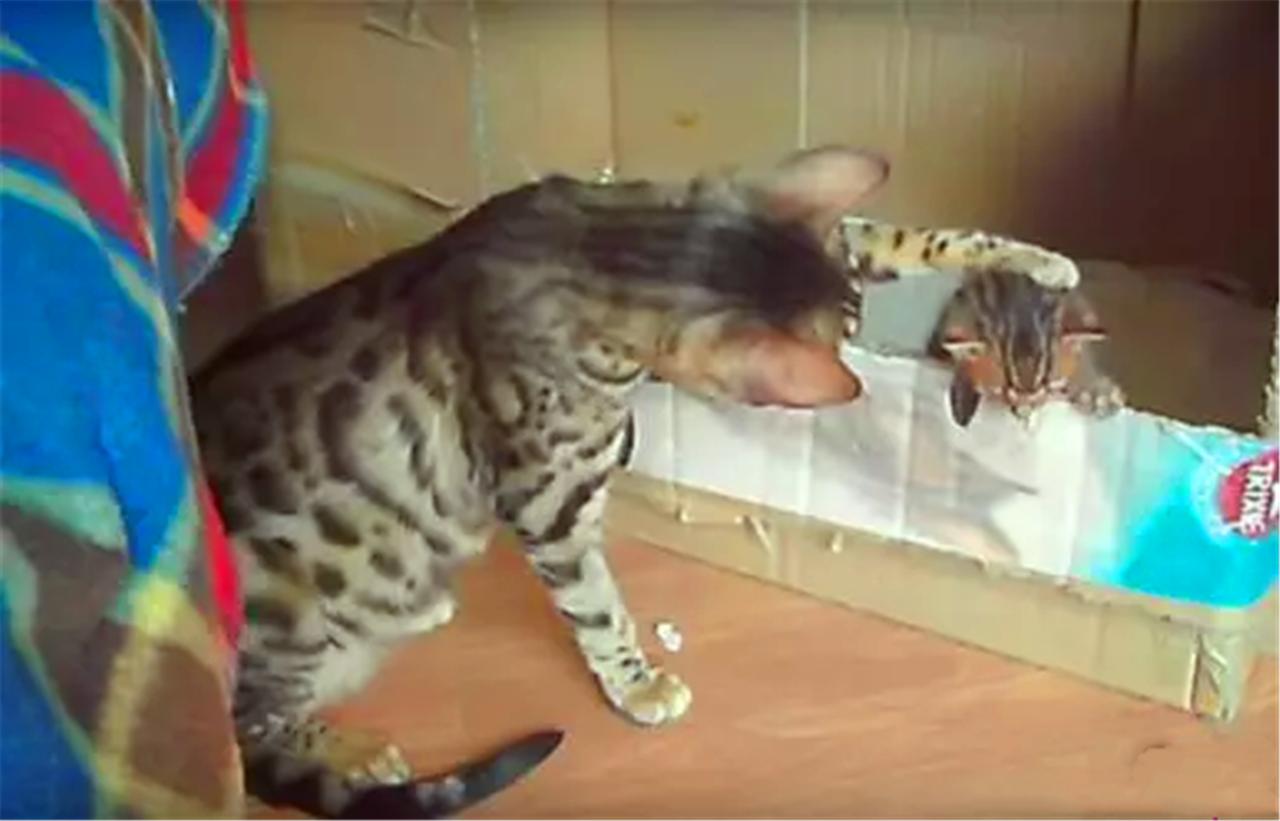 母猫看着自己刚生的小猫,越来越可爱,自己都忍不住要亲一下