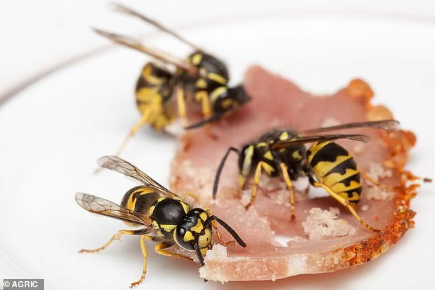 大黄蜂也疯狂:苹果汁喝醉后攻击性强,数百万德国蜂成英国人噩梦