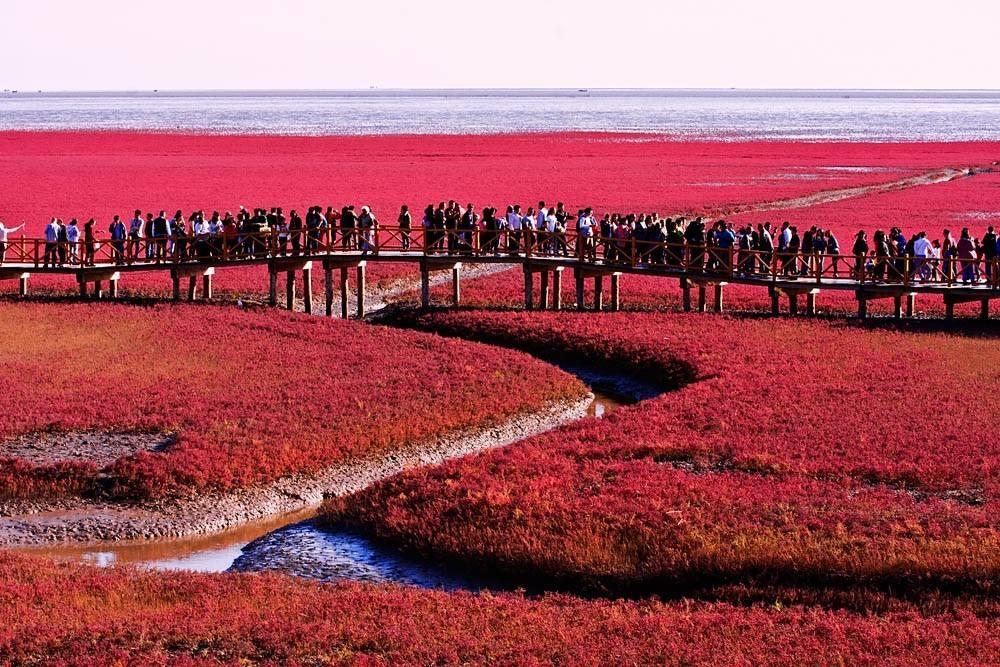 中国这片海滩美哭全国 高雅紫红色让人陶醉,去晚了等半年