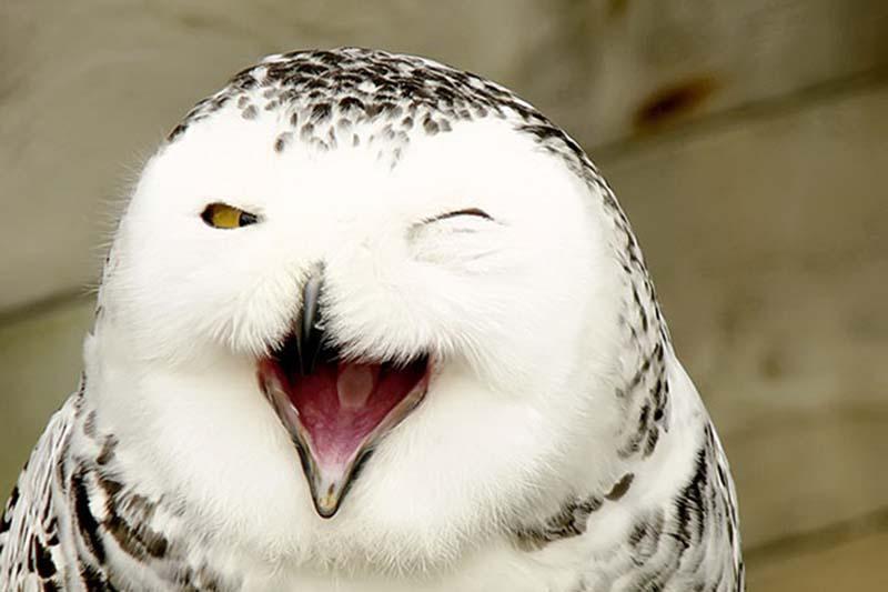 动物的笑容是怎样?