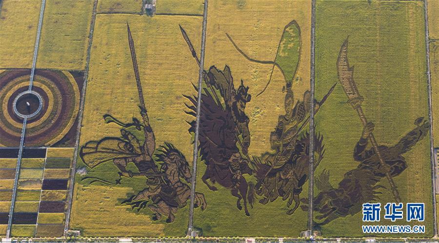 稻田作画绘出丰收颜色