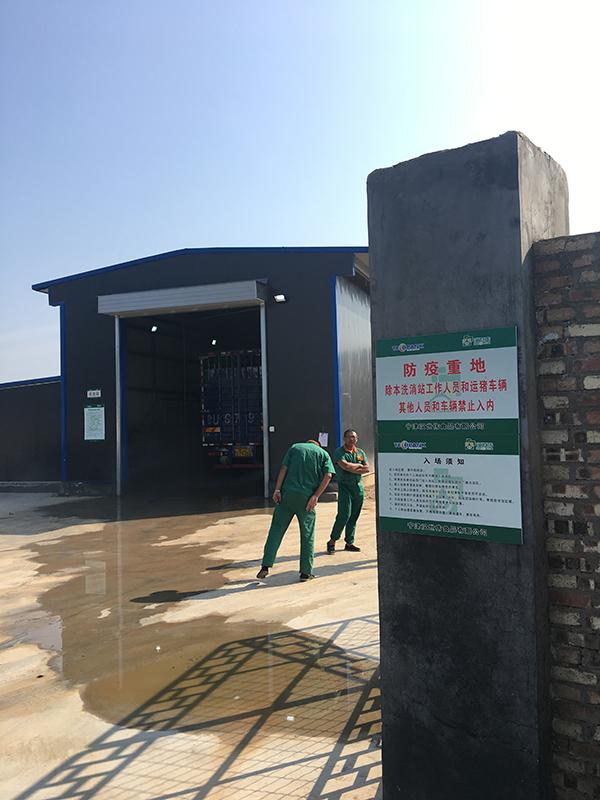 养猪企业走访:母猪存栏目标调高五成,十多个项目昼夜施工