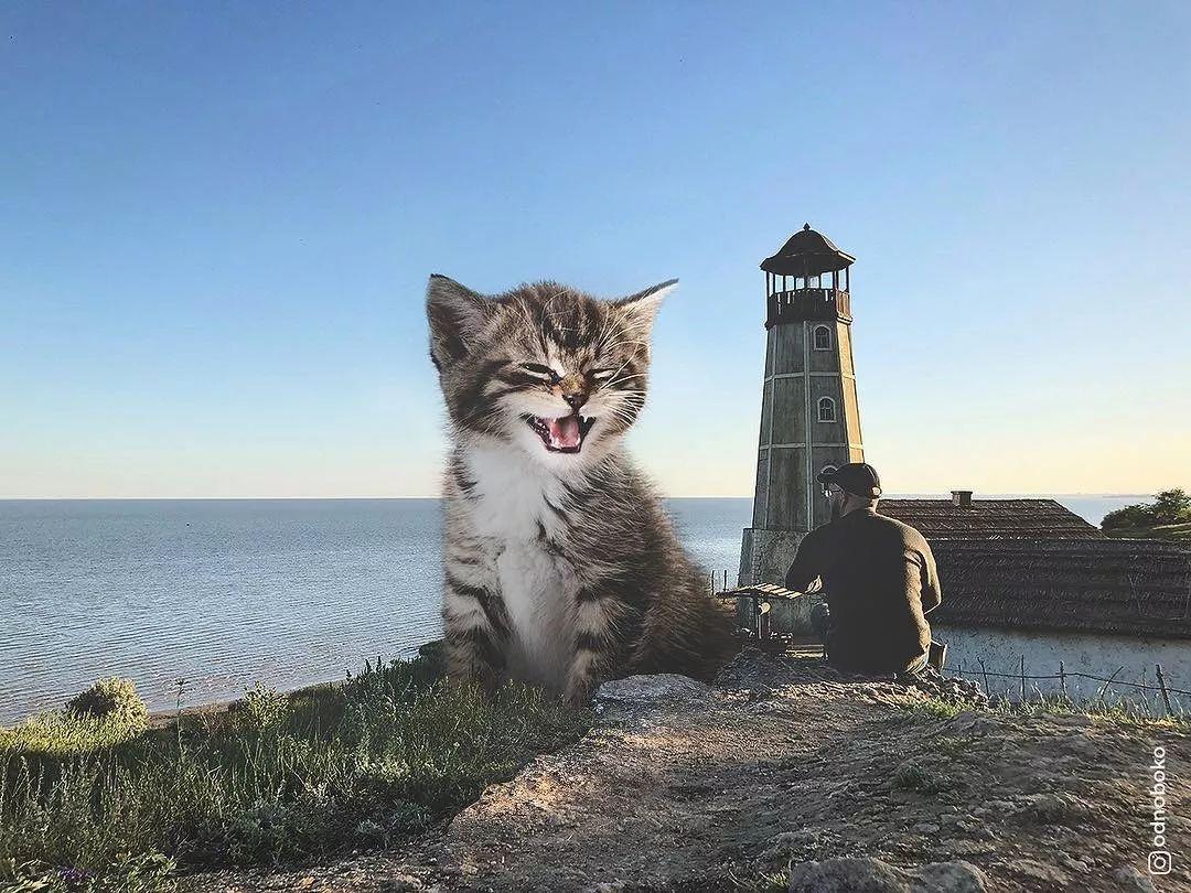 撸撸欧美色吧_他养了一只3米高的猫,私密照曝光后,10万人云撸猫:撸猫一时爽,一直撸