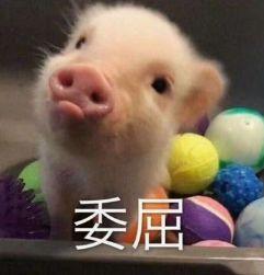 国家发话了!养猪最高补助500万!湘西人要组队养猪吗