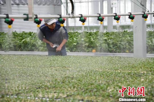"""专家聚兰州新区把脉""""数字农业"""":""""智推""""西部农业提速增效"""