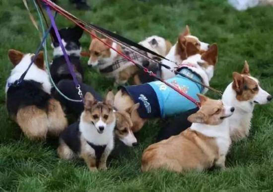 济南:遛狗不栓绳被处罚后不改正5年内不能养狗