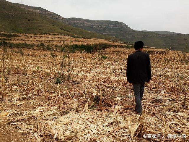 <b>情怀不能当饭吃!假如你是农民,种地不赚钱可能亏本,你会坚持吗</b>
