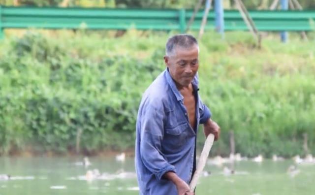 70岁老人养3000只鸭子,外人看了眼红,老人:不如外面打工