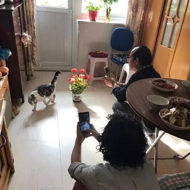 劝父母养宠物需谨慎,你的家庭地位会...