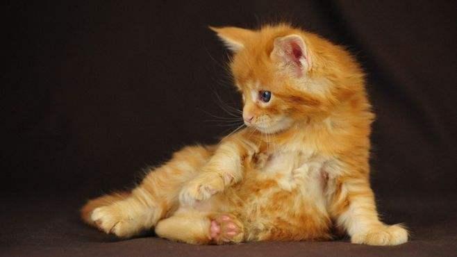 普贝斯教你两款家庭自制开胃猫饭