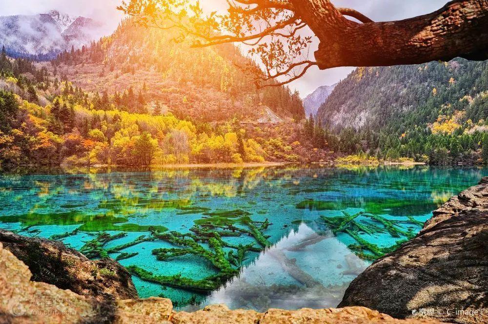 惊艳绝伦 全球最美森林令人叹服图片